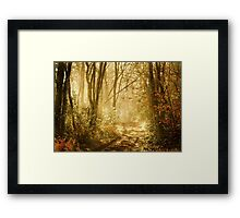Light To My Path Framed Print