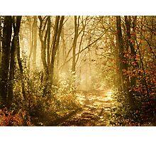 Light To My Path Photographic Print