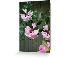 Little Pink Bells Greeting Card