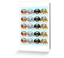 Australian Shepherd Puppies all 4 colors Greeting Card