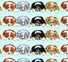 Australian Shepherd Puppies all 4 colors by Barbara Applegate