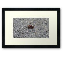 A dying hornet n°3 Framed Print