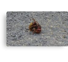 A dying hornet n°2 Canvas Print