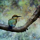Rainbow bee-eater.  by DaveBassett