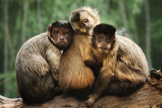 Three Wise Monkeys by Heather Prince
