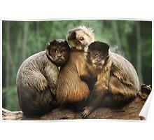Three Wise Monkeys Poster
