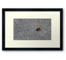 A dying hornet n°1 Framed Print