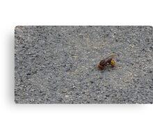 A dying hornet n°1 Canvas Print
