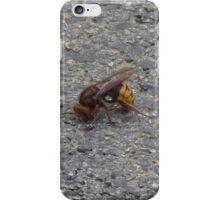 A dying hornet n°1 iPhone Case/Skin