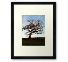 High Tree Framed Print