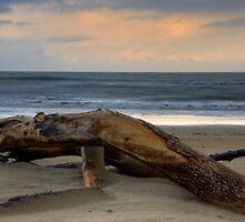 Stormy Drift Wood Aftermath by David-Collard