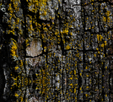 Mossy wood bark Sticker