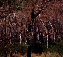 Uluru by HERGTO