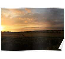 Crops at sunset Poster