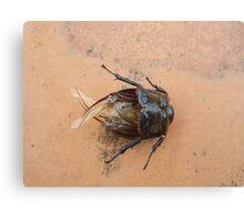 cockroach Canvas Print