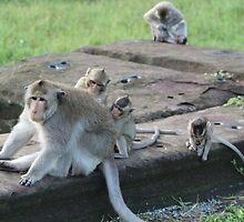 Monkeys of Angkor Wat IV - Cambodia. by Tiffany Lenoir
