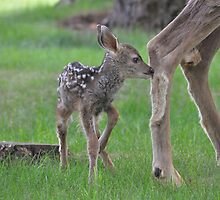 In Mom's Foot Steps  by Judy Grant
