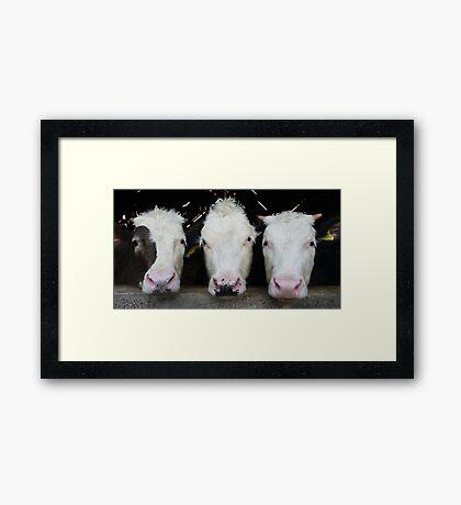Three of a Kind Framed Print