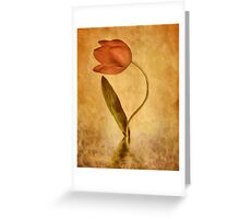 The Tulip Greeting Card
