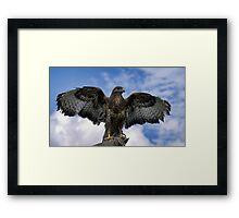 RED KITE Wingspan Framed Print