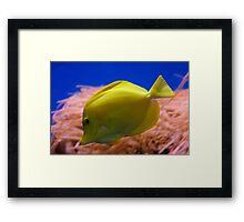 Yellow Tang Framed Print