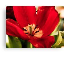 Subtle Tulip Canvas Print