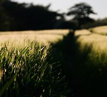 Depth of a field by Jon Tait