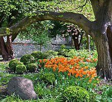 Garden by John (Mike)  Dobson