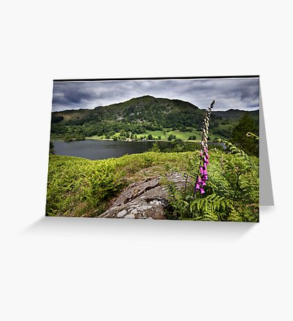 Foxglove above Rydal water Greeting Card