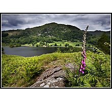 Foxglove above Rydal water Photographic Print