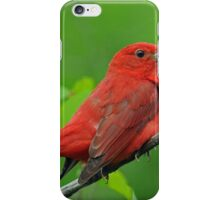 Summer Tanager iPhone Case/Skin