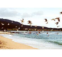 In Flight      Carmel, Ca Photographic Print