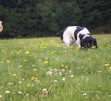 Sniffing the flowers by Alice Oates