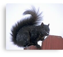 Snowy Black Squirrel  Canvas Print