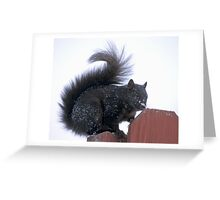 Snowy Black Squirrel  Greeting Card