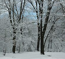 Winter Trees by William Sanford