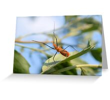 Milkweed Assassin Bug Greeting Card