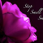 Stop, Smell, Smile by Dana Harvey