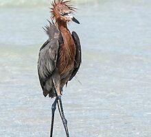 Goofy looking Egret by Eivor Kuchta