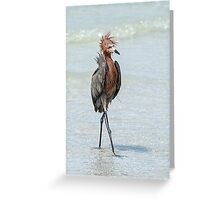 Goofy looking Egret Greeting Card