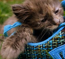 cat tip # 1 - blame the dog for messing up the shoe by Michelle  Sogan