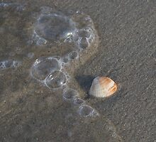 Sea shell on the sea shore by bcollie
