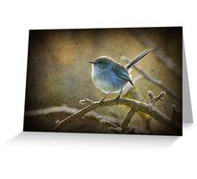 Fairy Wren - Non breeding male Greeting Card
