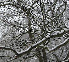 Snow... by Niki Clay
