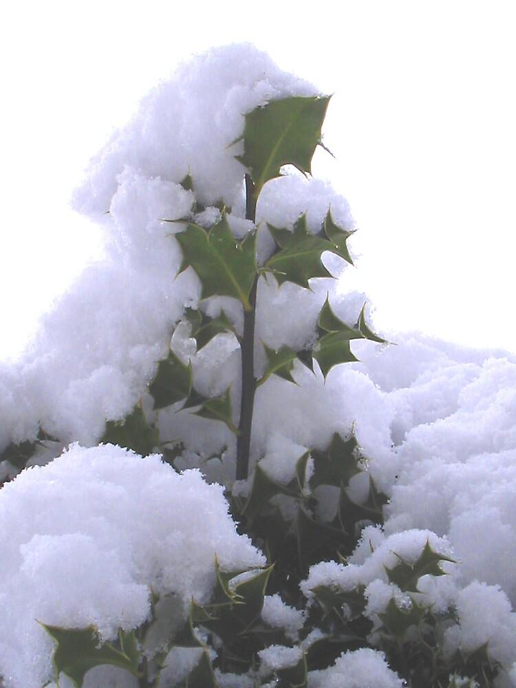snowy holly by DUNCAN DAVIE