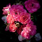 Tea Roses  by G. Patrick Colvin