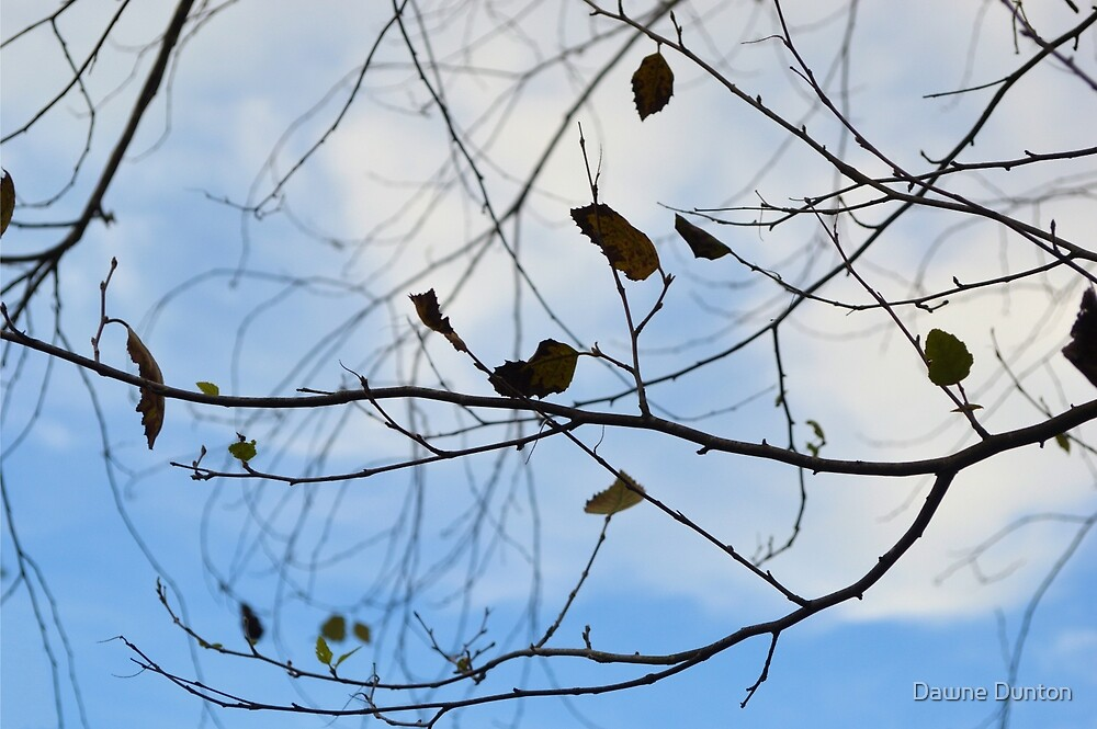 Autumn 2 by ©Dawne M. Dunton