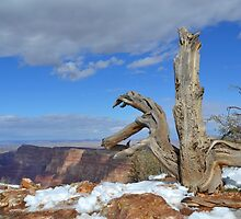 Grand Canyon 12 by Leona Bessey