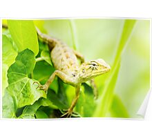 Forest Crested Lizard Poster