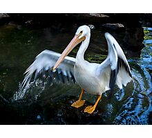 Pelican at Play Photographic Print